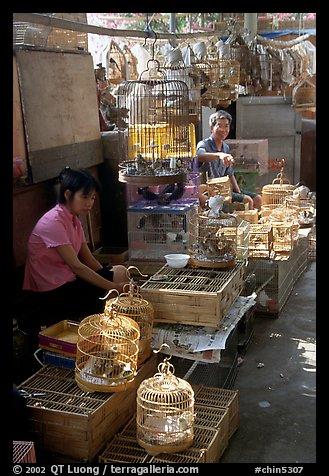 Picture Photo Bird Market Guangzhou Guangdong China
