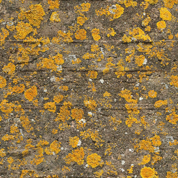 Moss0148 Free Background Texture Fungus Mold Concrete