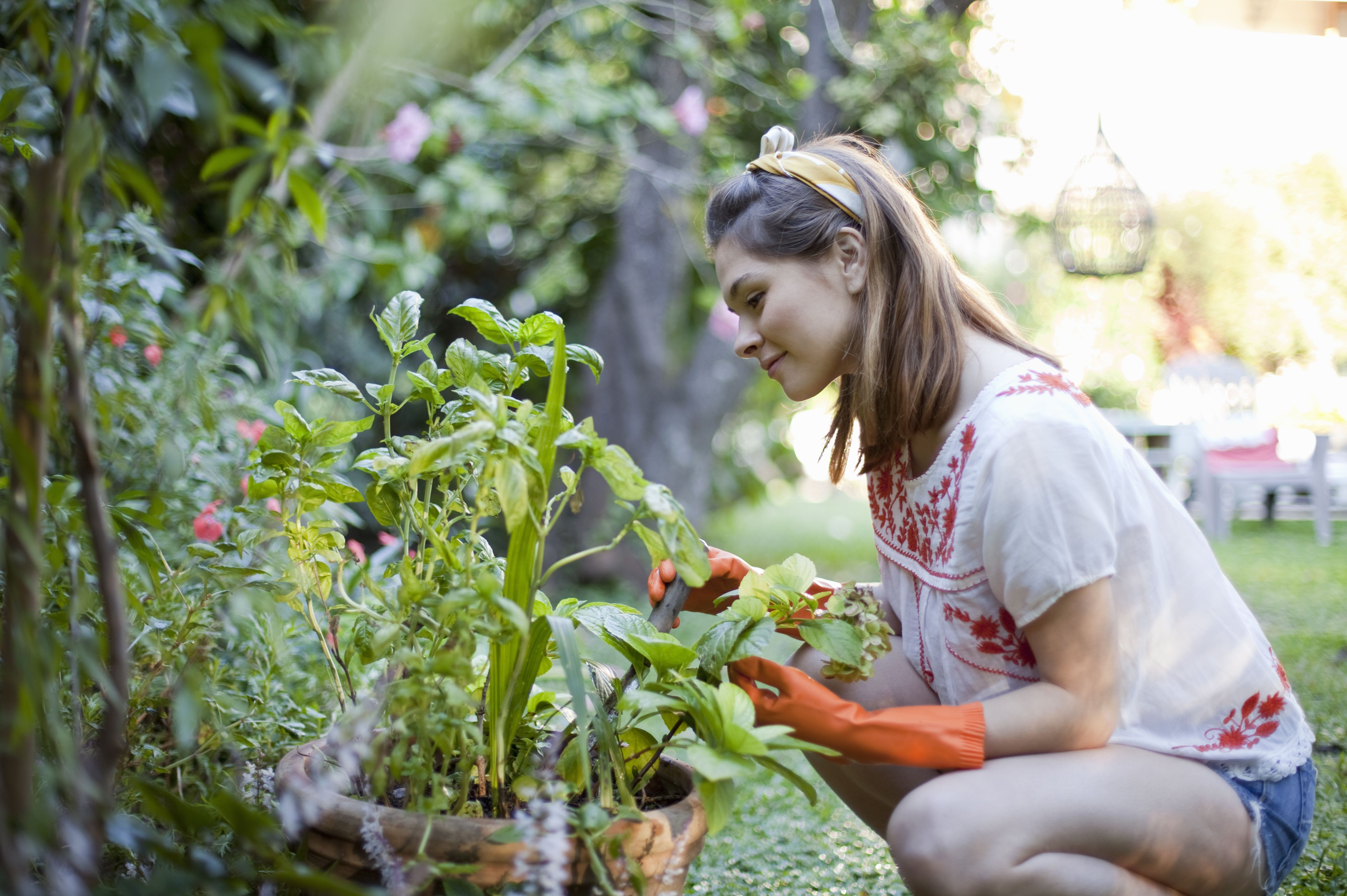 people gardening pictures - HD1280×853