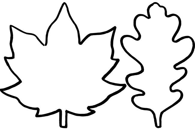 Leaf Template Leaf Outline