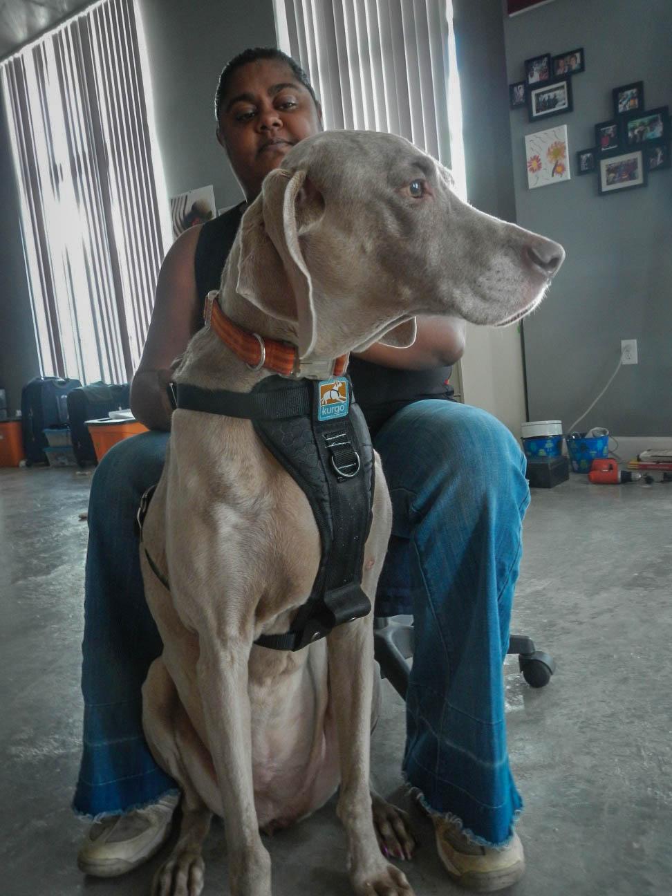 Dog Car Safety Kurgo Auto Harness Zip Line Review