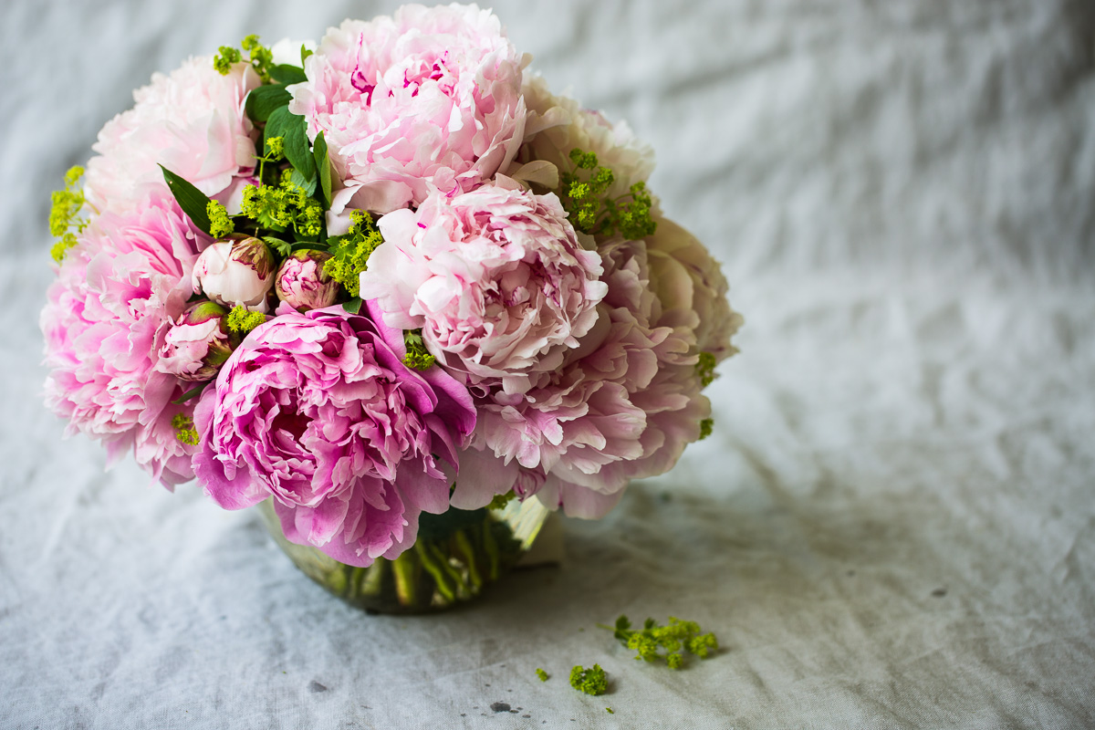 Peony Flowers   The Gardener Cook For the early June bride or bridesmaid  peony are up there with the true  romantics  rivaling ranunculus and roses  however  they last only a few  days in the