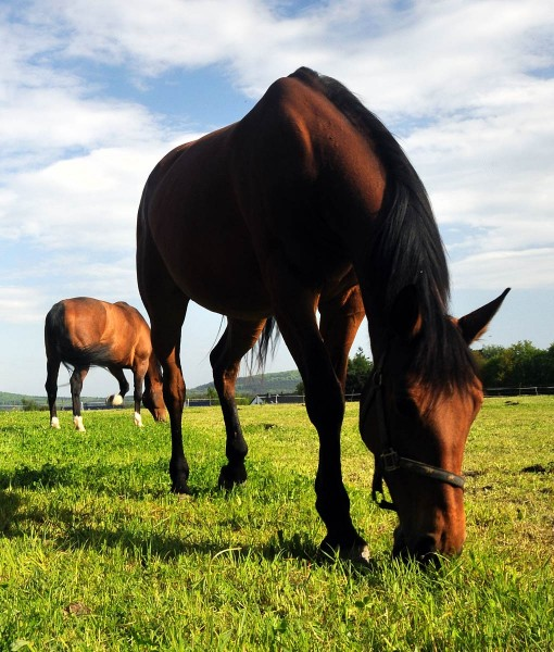 Horse Pasture Seed For Clay Soil - TheGrassSeedStore.co.uk