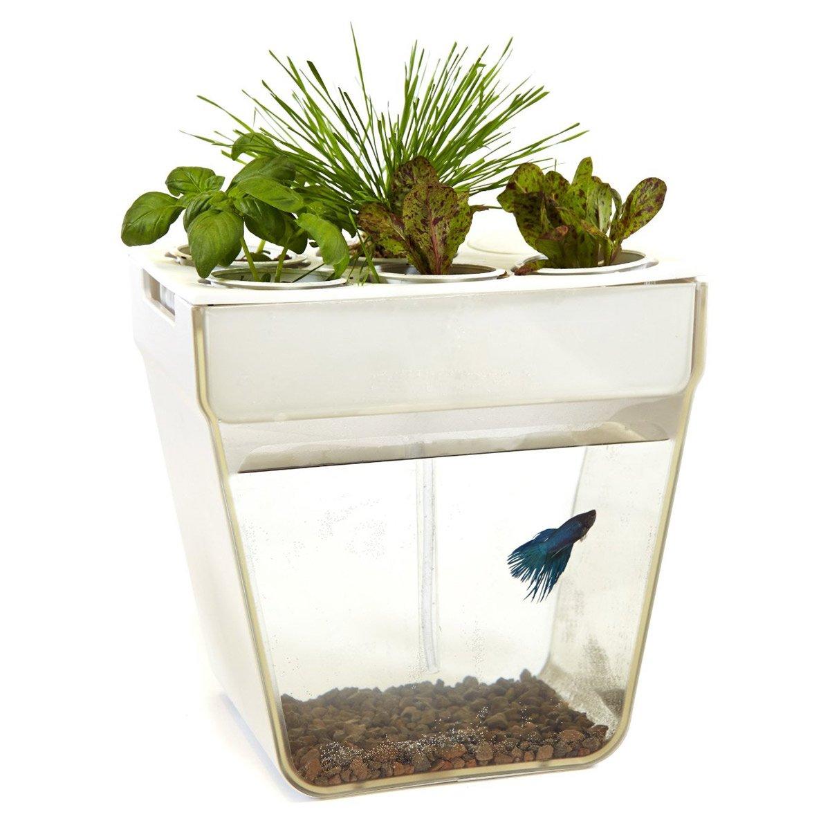 Diy Water Garden Fish Tank
