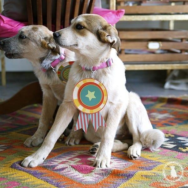 sweetest_puppies_award