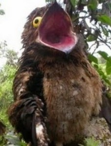 Potoo Bird by the trash guardian on DeviantArt I just discovered this bird and what the fuck  It s horrifying and I love  it