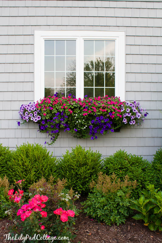 Large Container Planting Ideas