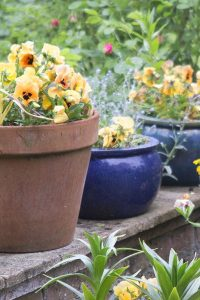 The best plants for amazingly low maintenance garden pots   The     Low maintenance garden pot plants