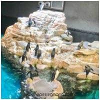 The penguins exhibit at the Boston Aquarium.