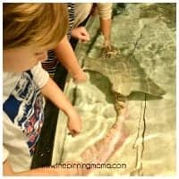 Shark and Ray Touch Tank Boston Aquarium