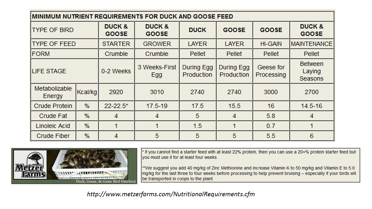 C Lcul T G Livestock Feed Will You H Ve Enough Prepper