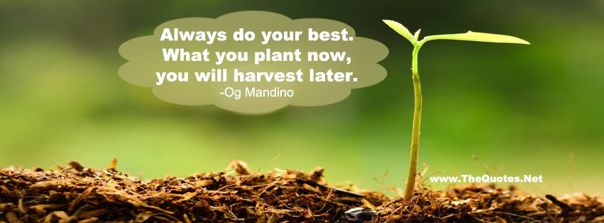 Harvest Facebook Covers