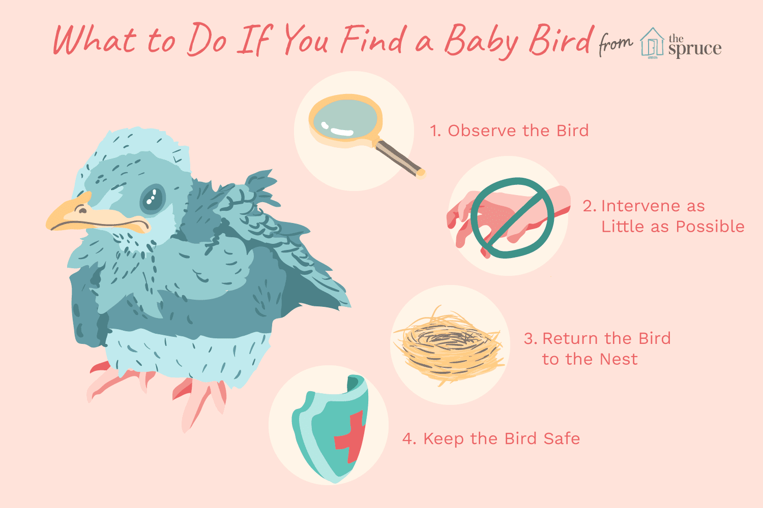 Feed Bird How Do Baby You