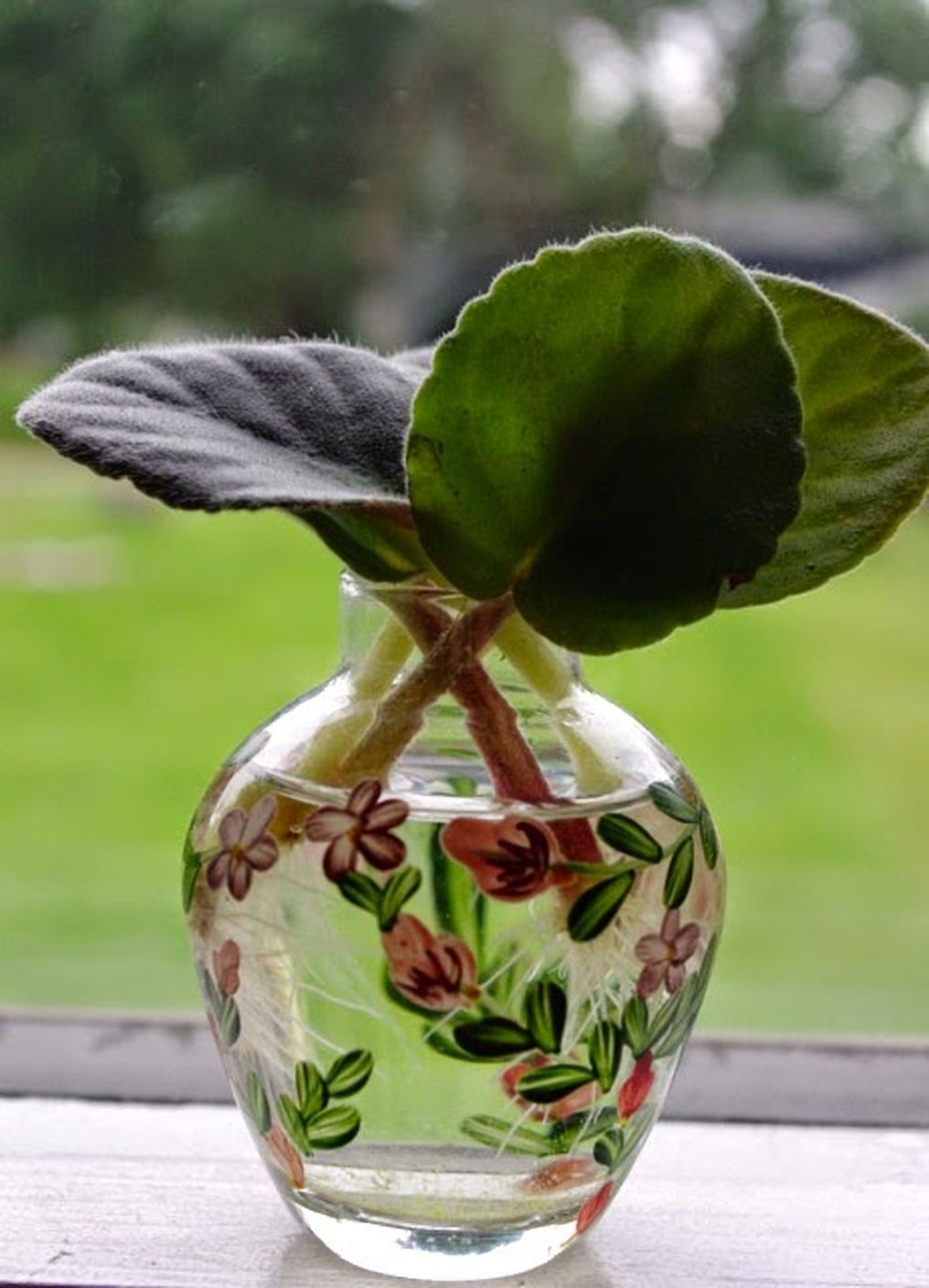 Houseplants You Can Grow In Water