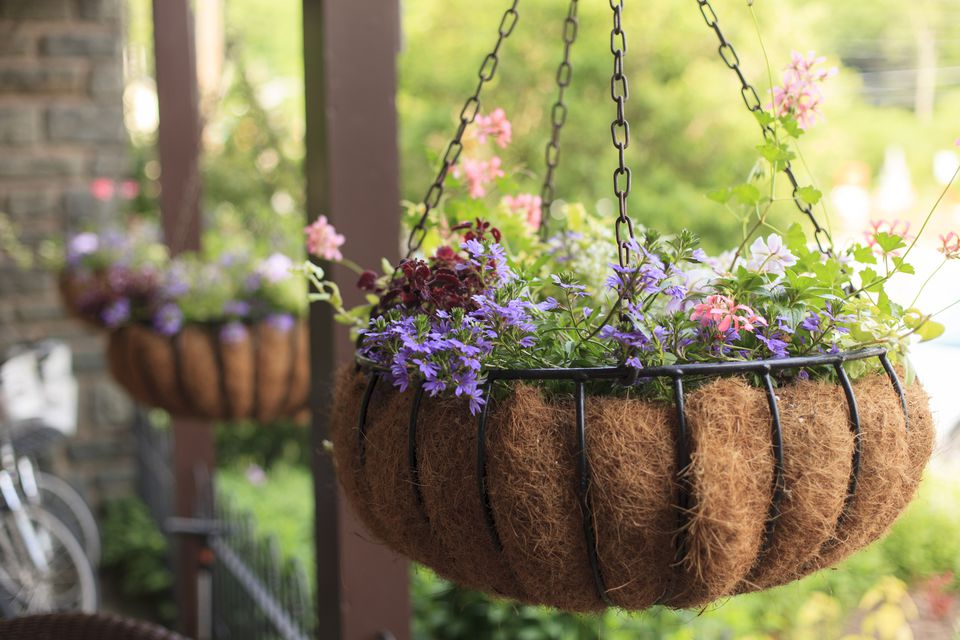 Ever Flowering Plants