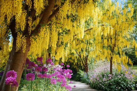Flowering Trees For Landscaping Inspiration