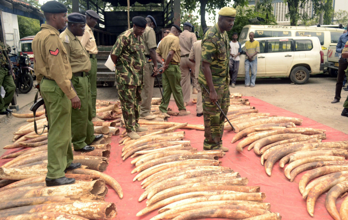 Antiques Roadshow Will Stop Appraising Ivory Tusks