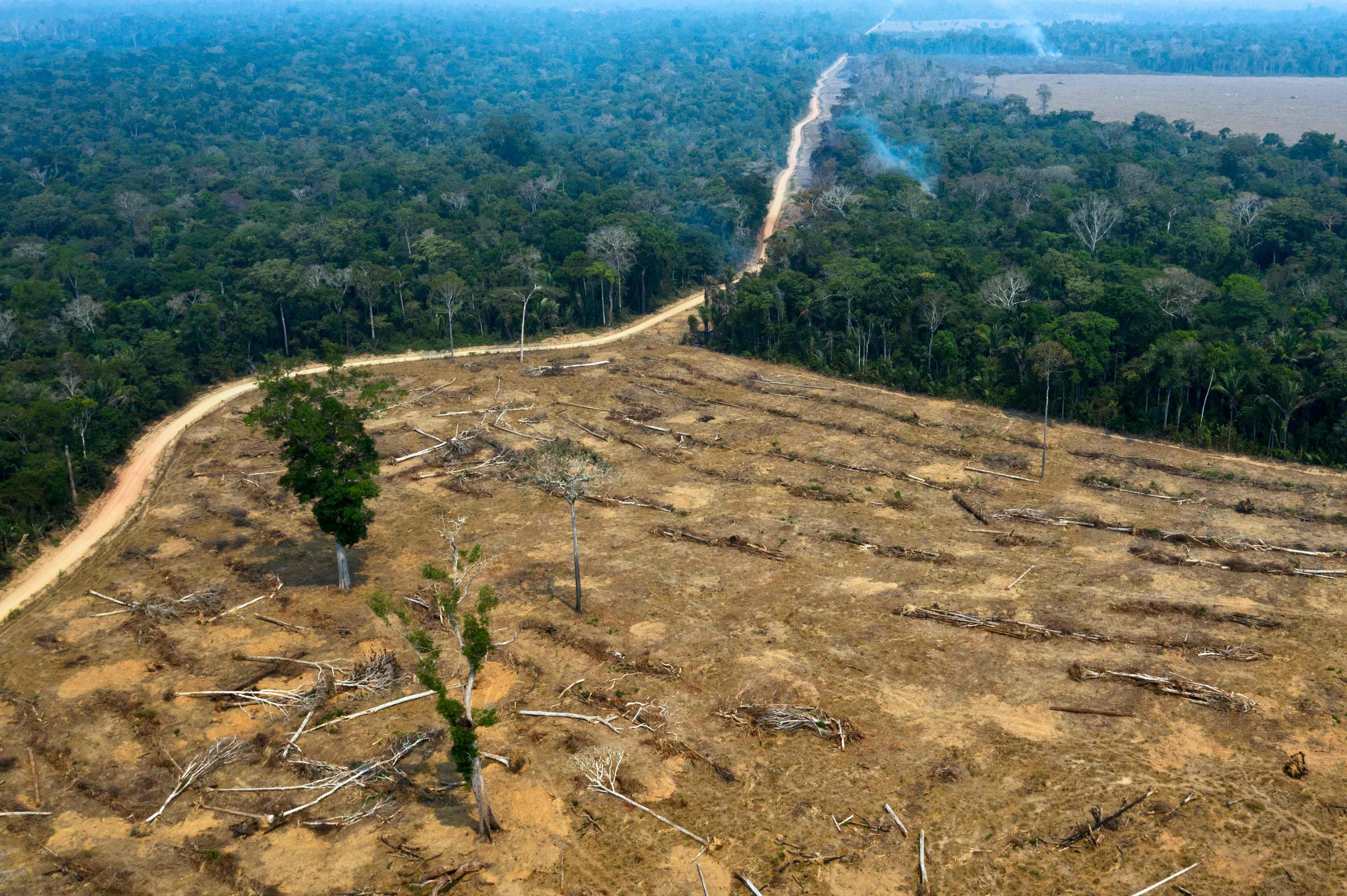 amazon rainforest deforestation - HD1500×998