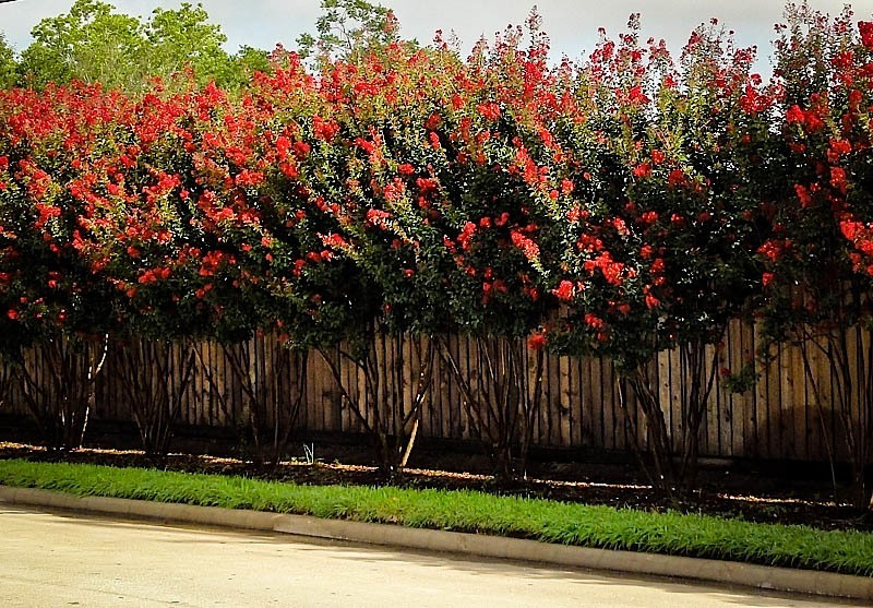 Drought Resistant Landscaping