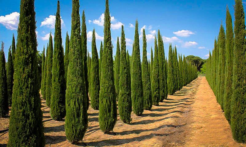 Types Trees Italy