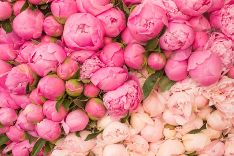 Peonies   Flower Markets    This Is Glamorous Design Inspiration  Peonies and Flower Markets