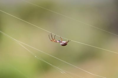 Characteristics of Spiders