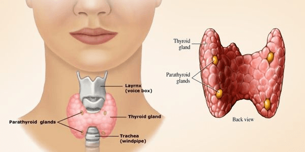Types Parathyroid Surgery
