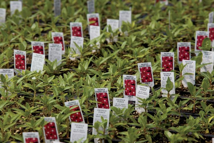 Fruit Tree Nursery Wholesale