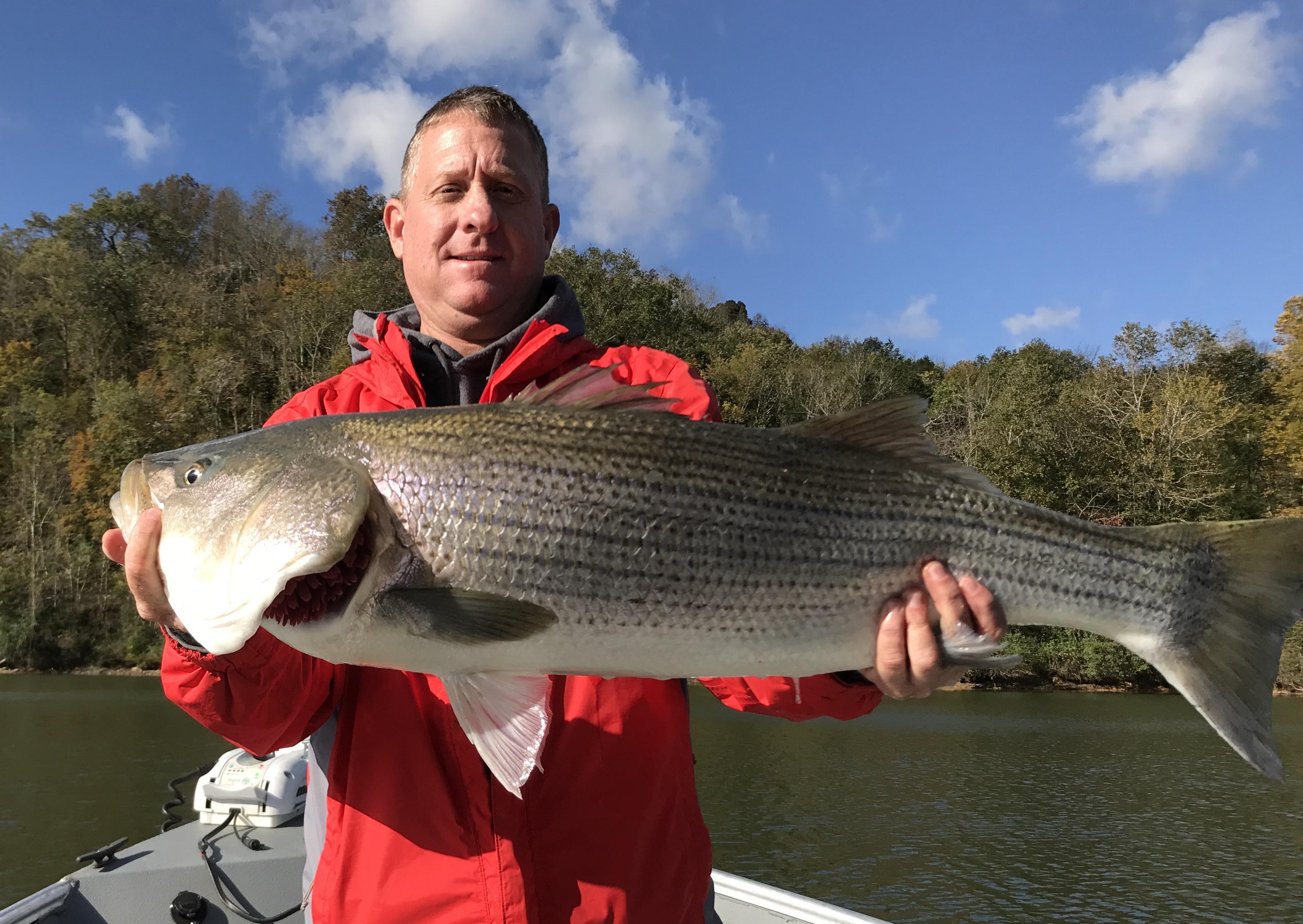 top Kentucky reservoir Trophy Striper Fishing
