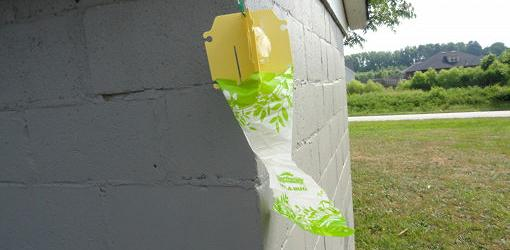 Do Japanese Beetle Traps Really Work Today S Homeowner