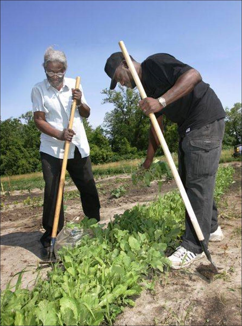 Community gardens: growing food brings people together ...