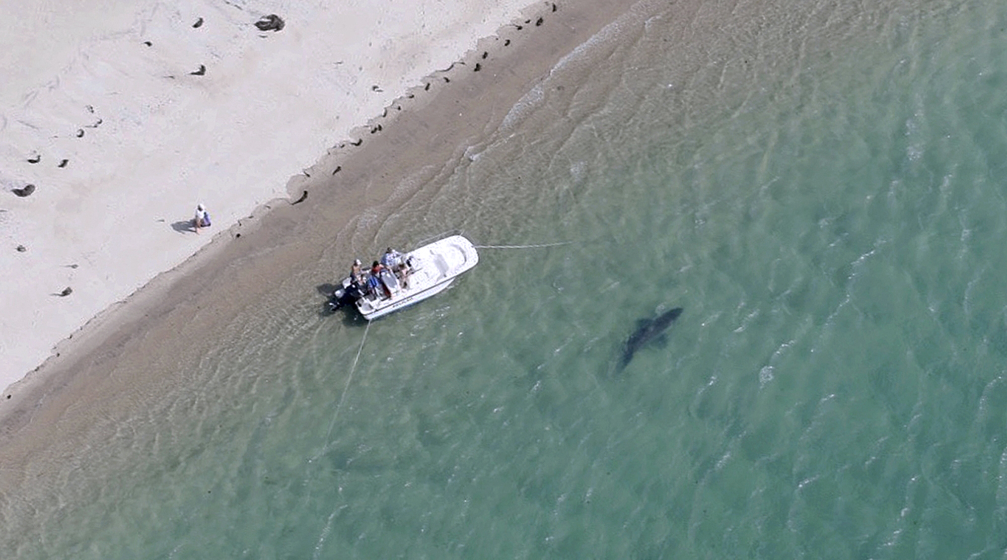 Shark Near Myrtle Beach
