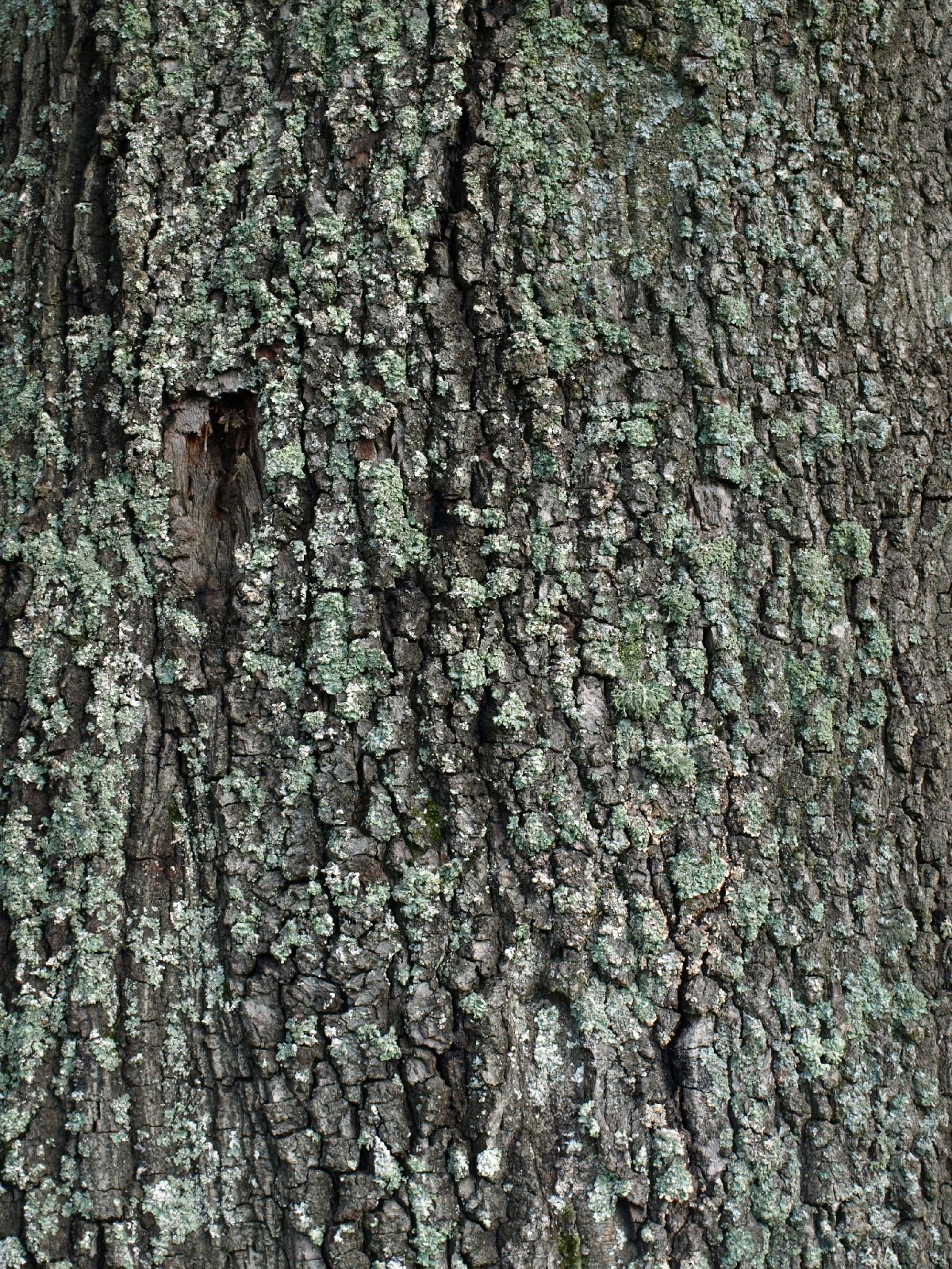Free Tree Bark Texture Photo Gallery