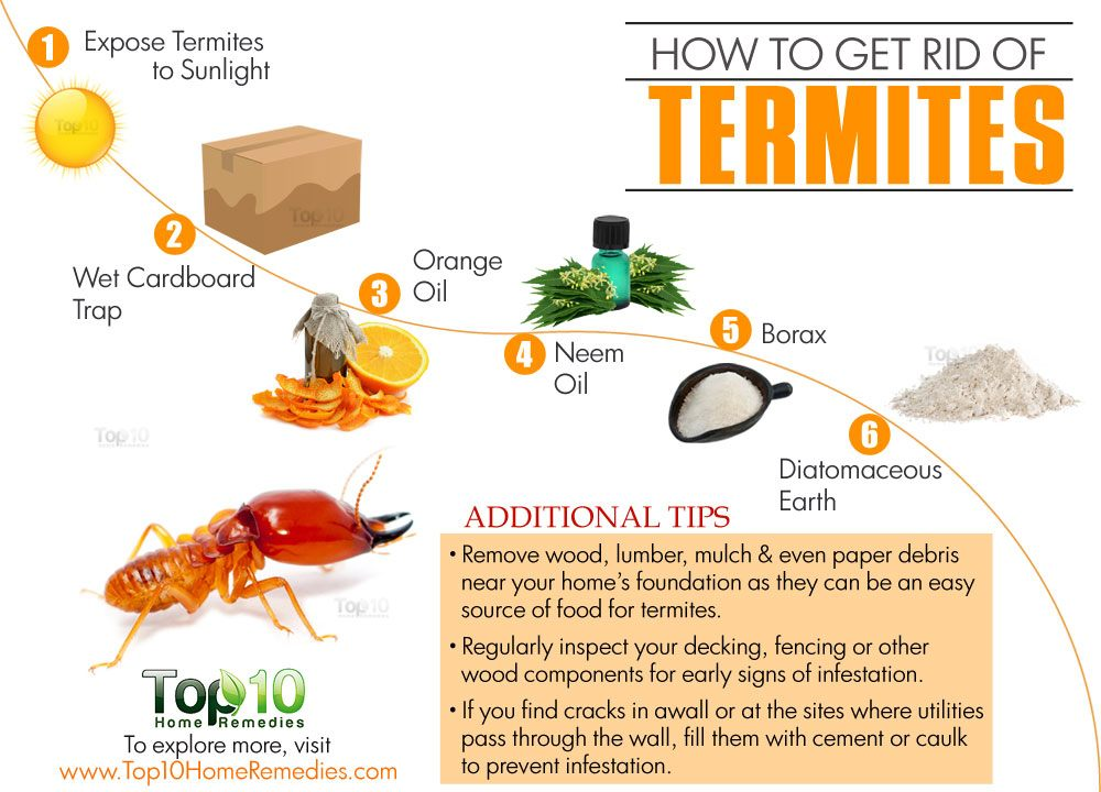 Orange Oil Termite Control