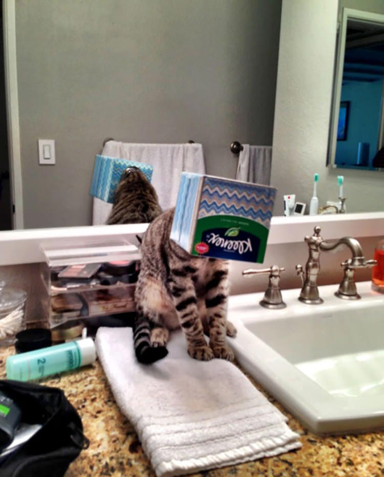 31 Cats That Instantly Regretted Their Poor Life Choices