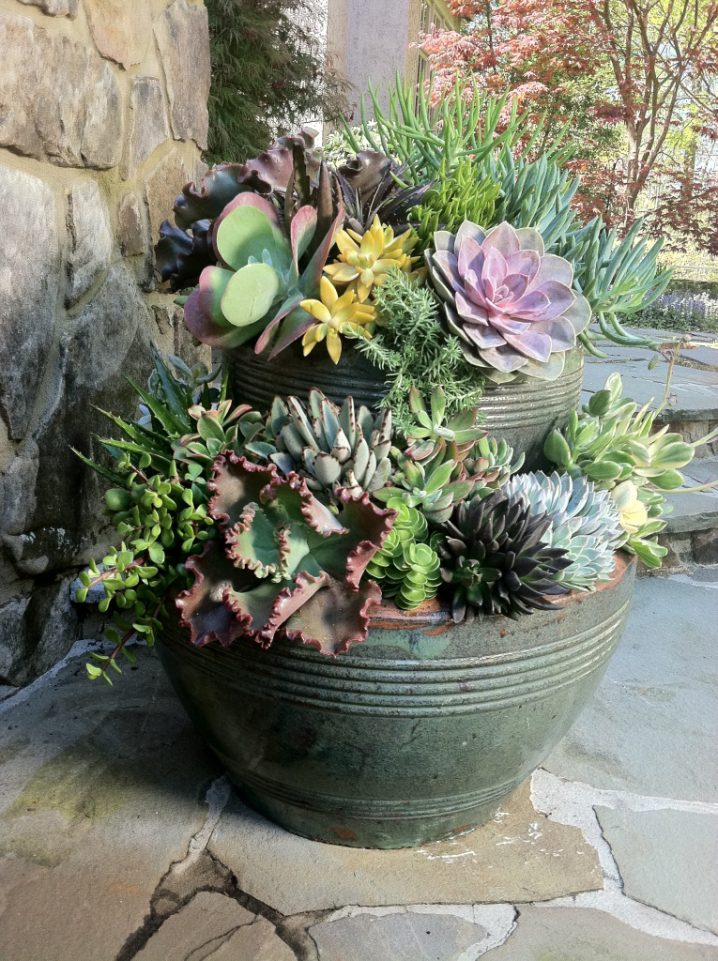 Tiny Succulent Pots