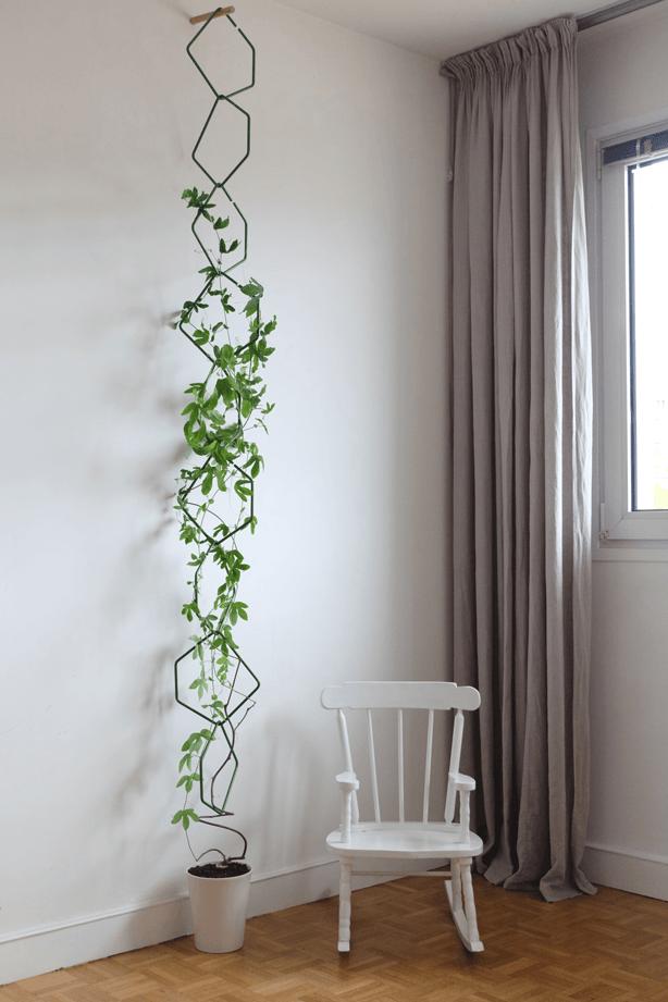Easy Grow Hanging Plants