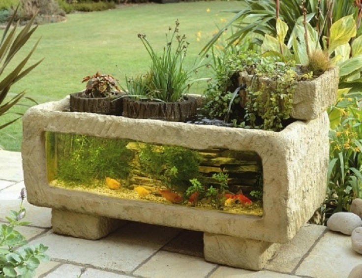 Fish Tank Plants Top