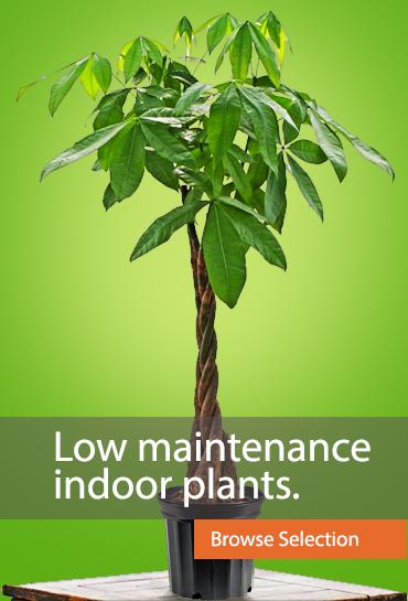 Tall Planters Toronto