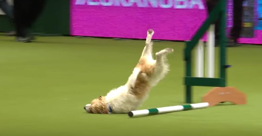Laugh Olympics Dog Laugh