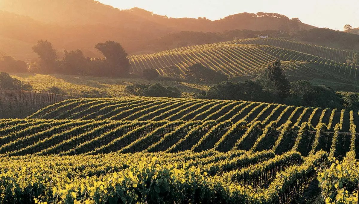 Winemaking Total Wine Amp More