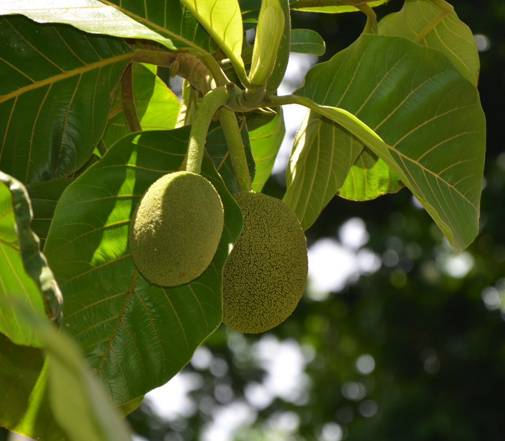 How Fresh Fresh Fruit