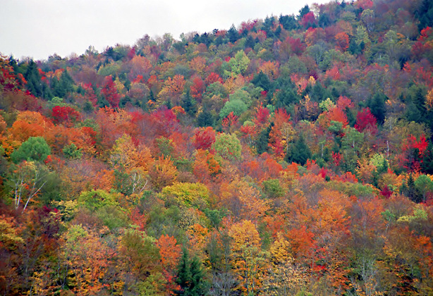Travel To Vermont By Rented Car For The Fall Foliage Season In Autumn Pictures Of Autumn Leaves