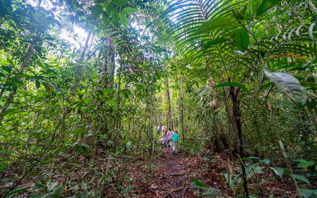 amazon rainforest location - 1024×640