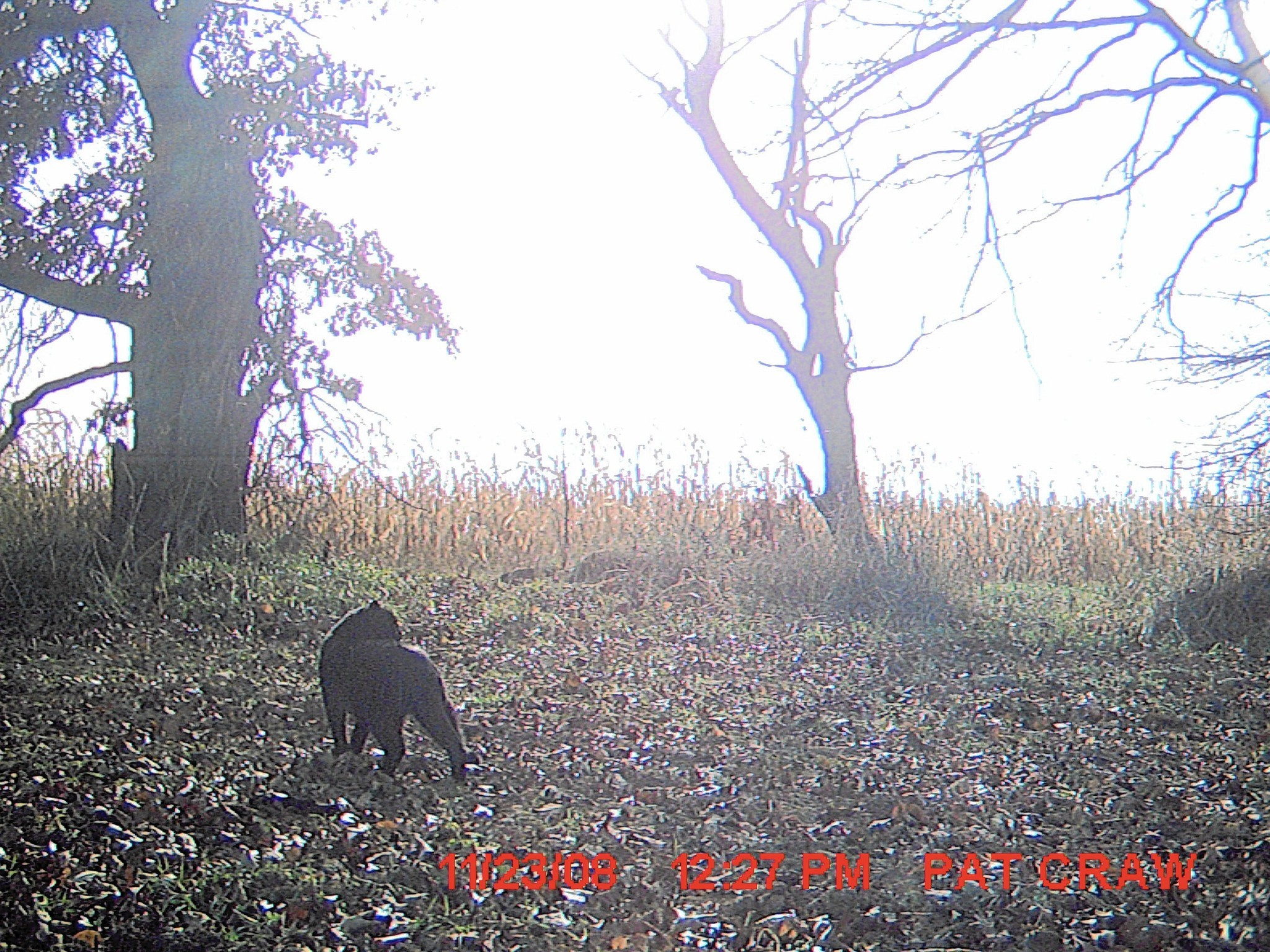 Cat Lion Sightings Southern Indiana