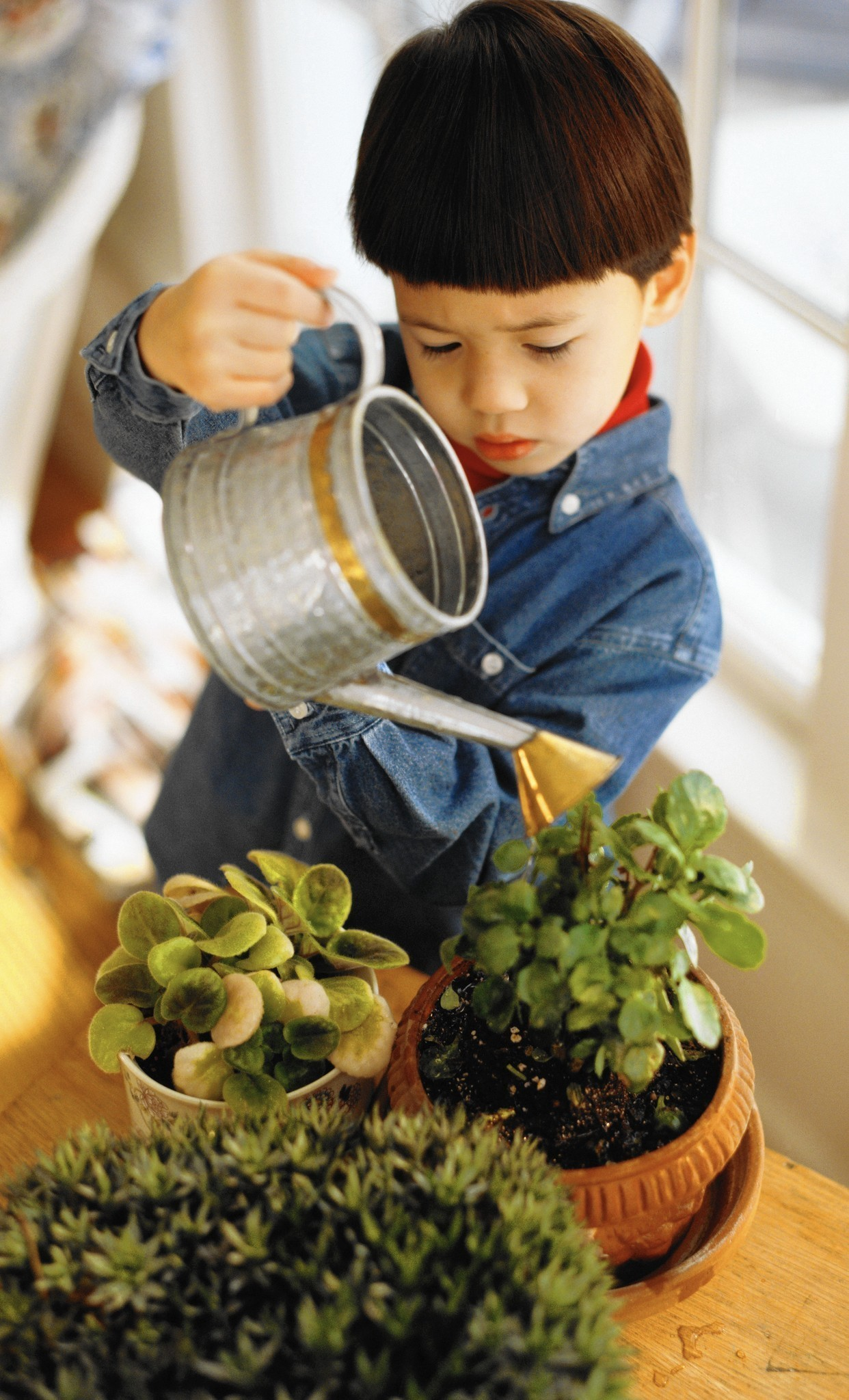 Children Can Grow Along With The Houseplants They Tend