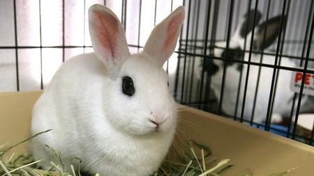 Image of: Pet Store Bec96102e3335ca183455d4cc71932f2image Last Chance Animal Rescue Lake Elsinore Rabbits Get Their Own Home At Animal Shelter The