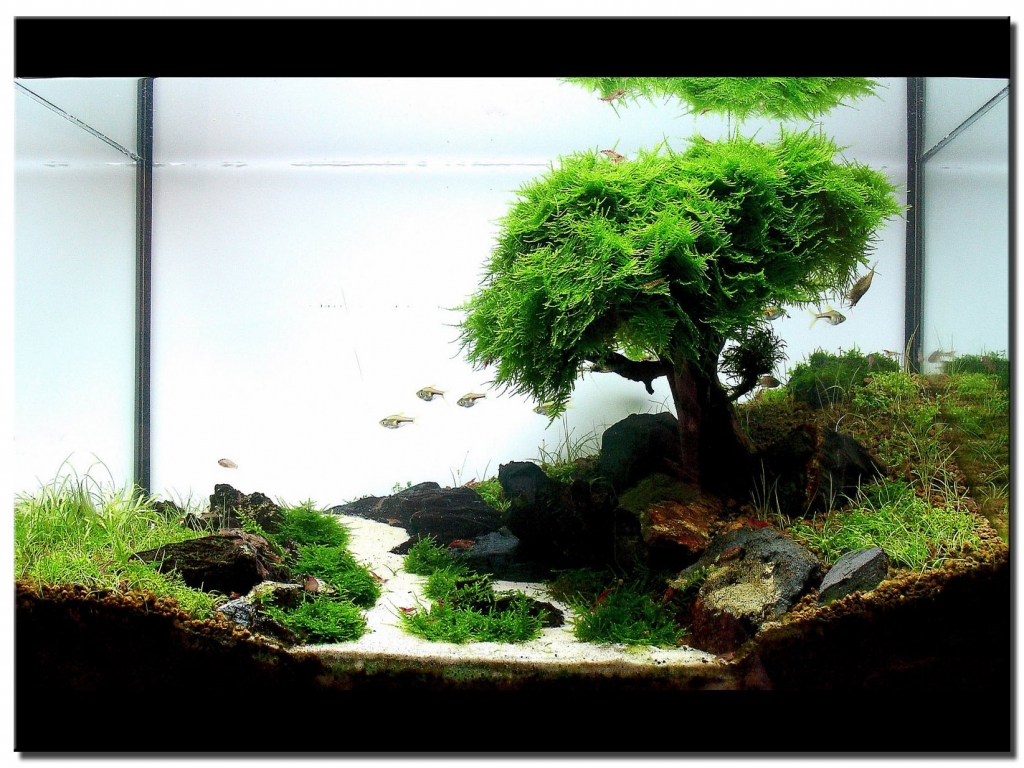 55 Gallon Fish Tank Ideas Fish Tank Ideas Small Beautiful