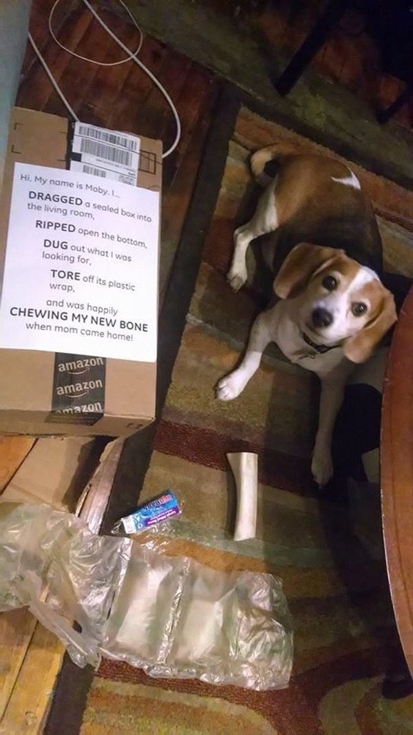 The Most Hilarious Dogshaming Photos From 2014