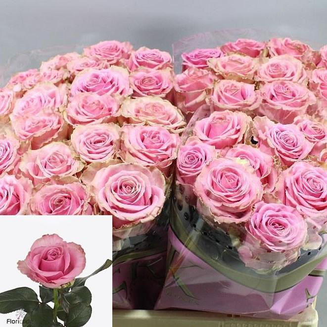 Uk Florist Supplies